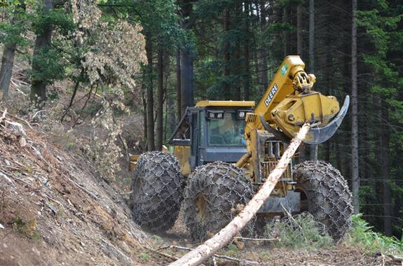 Felling Dangerous Trees - Services